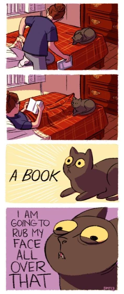 catrubfaceonbookcatbeingacat